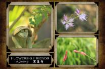 Jousen-ji: Flowers & Friends