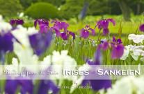Irises at Sankeien