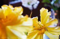 Sunny Yellow Flowers