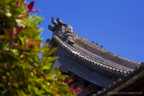 Some birds perched on a temple roof at Soji-ji