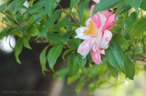 Flower on a Tree