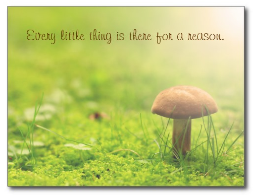 Wild Mushroom by Beverly Claire Kaiya