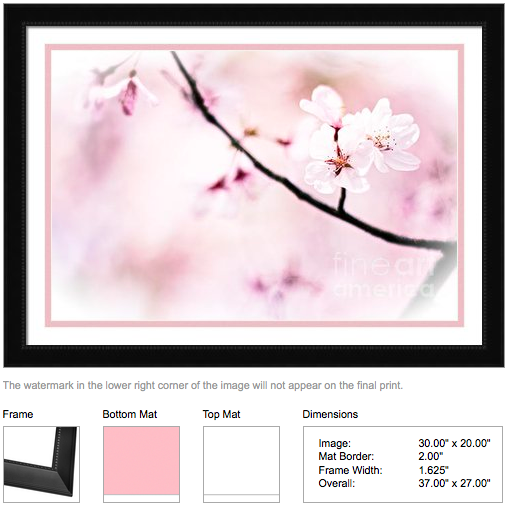 White Cherry Blossoms in the Sunlight by Beverly Claire Designs