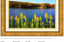 Autumn Lake with Canada Goldenrod