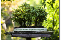 Miniature Forest Bonsai