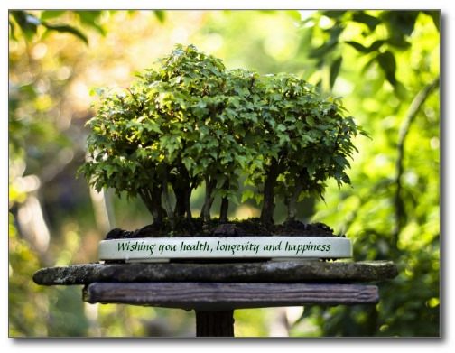Miniature forest bonsai. Photo by Beverly Claire Kaiya.