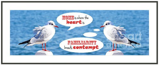 Philosophical Seagull Twins by Beverly Claire Designs