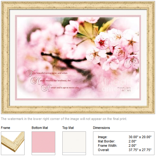 Beautiful Cherry Blossoms in Spring When Nature Resumes Her Loveliness by Beverly Claire Designs