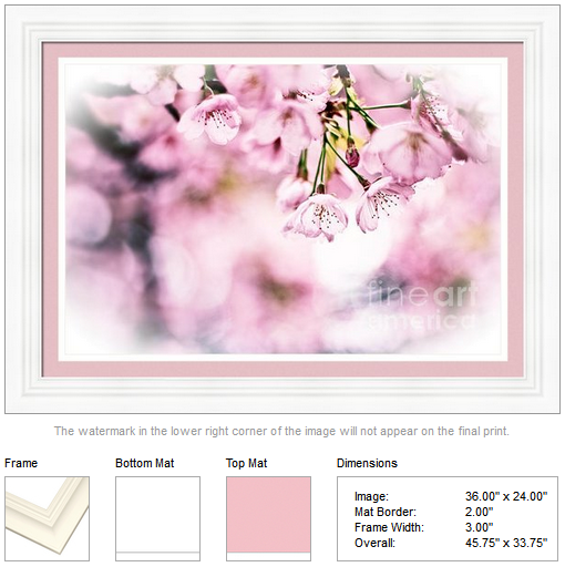 Beautiful Sunlit Cherry Blossoms by Beverly Claire Designs