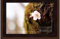 Single Cherry Blossom on Tree Trunk