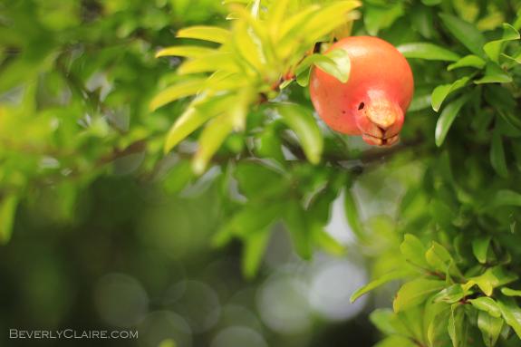 One of the many orange fruits of autumn