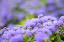 Bluemink