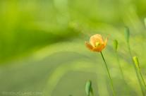 Hello Sun, Says the Flower