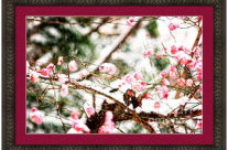 Plum Blossoms Covered in Snow