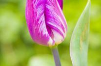 Vestige of Spring