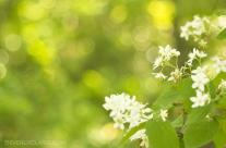 Wildflower at Takatoriyama