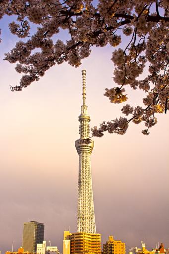 Tokyo Sky Tree at dusk
