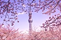 Tokyo Sky Tree Celebration