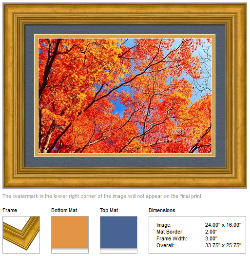 Autumn Leaves and Blue Sky by Beverly Claire Kaiya