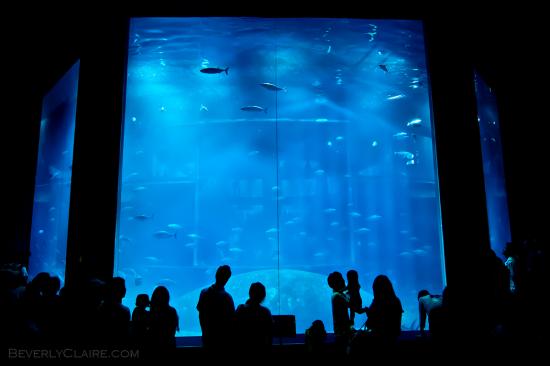 Tuna aquarium