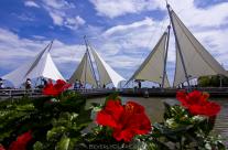 Sail Shades at the Tokyo Sea Life Park